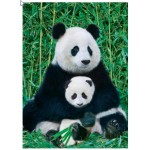 Puzzle  Eurographics-8000-0173 Panda und Baby
