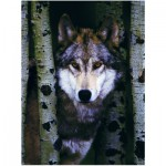 Puzzle  Eurographics-8000-1244 Der graue Wolf