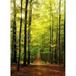 Puzzle  Eurographics-8000-3846 Waldweg