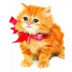 Puzzle  Eurographics-8104-0618 Katze mit ein Knoten