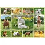 Puzzle  Schmidt-Spiele-56194 Tierkinder auf Bauernhof