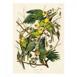Puzzle  Puzzle-Michele-Wilson-A520-650 Audubon - Les Perruches