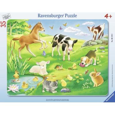 Ravensburger-06119 Rahmenpuzzle - Tiere auf der Wiese