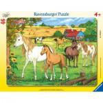 Puzzle  Ravensburger-06646 Pferde auf der Koppel