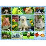 Puzzle  Ravensburger-12810 Meine erste Haustiere