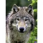 Puzzle  Ravensburger-14354 Wolfsportrait