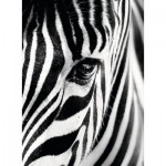 Puzzle  Ravensburger-14735 Zebra