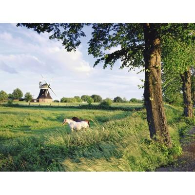 Puzzle Ravensburger-16635 Pferde vor Windmühle