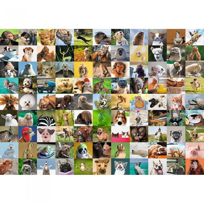 99 lustige Tiere