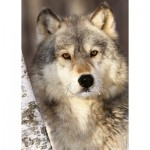 Puzzle  Ravensburger-19761 Wolf