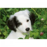 Ravensburger-94874-09430-05 Minipuzzle - Border Collie