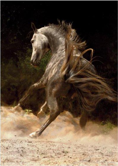 DToys-65940-MH01 Magie der Pferde: Araber 1 / schwieriges Puzzle