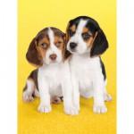 Puzzle  Clementoni-30356 Kleiner Beagle