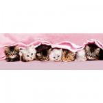 Clementoni-39127 Panoramapuzzle - Kätzchen in einer Reihe