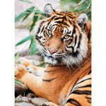 Puzzle  Clementoni-39295 Tiger