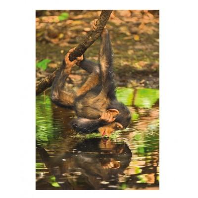 Puzzle Clementoni-39301 Schimpanse