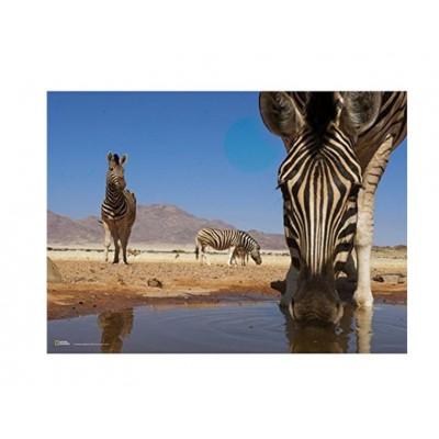 Puzzle Clementoni-39356 National Geographic: Zebra