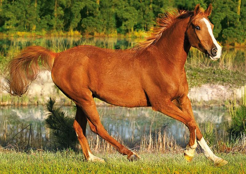 puzzle pferd