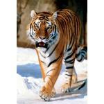 Puzzle  Trefl-10135 Sibirischer Tiger