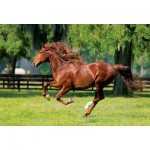 Puzzle  Trefl-10201 Galoppierendes Pferd