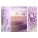 Puzzle  Trefl-10411 Lavendelfelder
