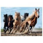 Puzzle  Trefl-10446 Pferde