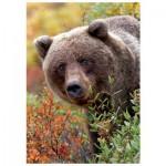 Puzzle  Trefl-10518 Grizzlybär, Alaska
