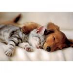 Puzzle  Trefl-16138 Schlafender Hund und Katze