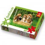 Puzzle  Trefl-17166 Ein Korb voller Beagle