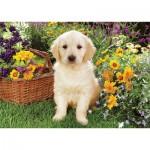 Puzzle  Trefl-37160 Labradorwelpe im Garten
