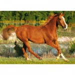 Puzzle  Trefl-37184 Galoppierendes Pferd