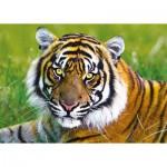 Puzzle  Trefl-37192 Tiger