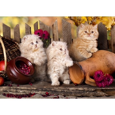 Puzzle Grafika-Kids-00322 Magnetische Teile - Persian kittens