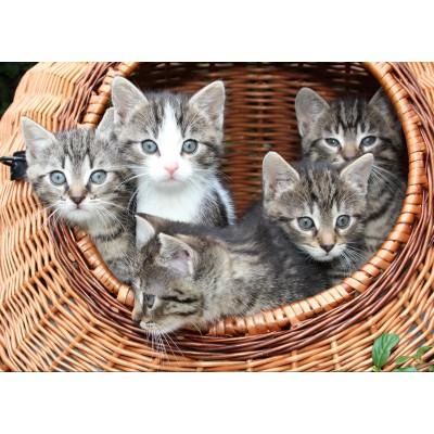 Puzzle Grafika-Kids-00522 Kätzchen im Körbchen