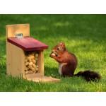 Puzzle  Grafika-Kids-00650 Eichhörnchen