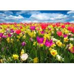 Puzzle  Grafika-Kids-00684 Magnetische Teile - Tulpen