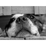 Puzzle  Grafika-Kids-00793 Hund