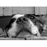Puzzle  Grafika-Kids-00796 Magnetische Teile - Hund