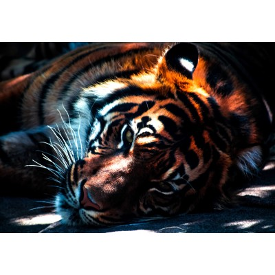 Puzzle Grafika-Kids-00962 Tiger