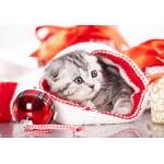 Puzzle  Grafika-Kids-01131 XXL Teile - Weihnachtskätzchen