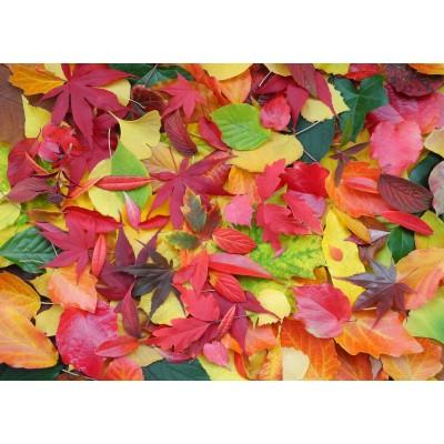 Puzzle Grafika-Kids-01163 Magnetische Teile - Herbst-Impressionen
