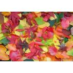 Puzzle  Grafika-Kids-01165 XXL Teile - Herbst-Impressionen