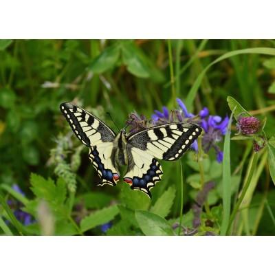 Puzzle Grafika-Kids-01223 Magnetische Teile - Schmetterling