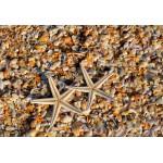 Puzzle   XXL Teile - Muscheln und Seestern