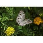 Puzzle   XXL Teile - Schmetterling