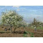 Puzzle   Camille Pissarro : Orchard in Bloom, Louveciennes, 1872