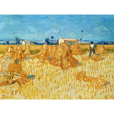 Puzzle Grafika-00072 Vincent van Gogh, 1888