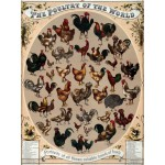 Puzzle  Grafika-00083 The Poultry of the World