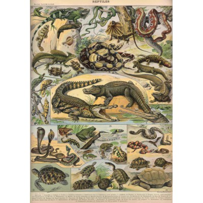 Puzzle Grafika-00589 Illustration du Nouveau Larousse Illustré: Reptiles, 1897-1904