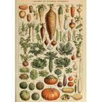 Puzzle  Grafika-00593 Illustration du Larousse pour Tous: Légumes et Plantes Potagères, XIXè Siècle